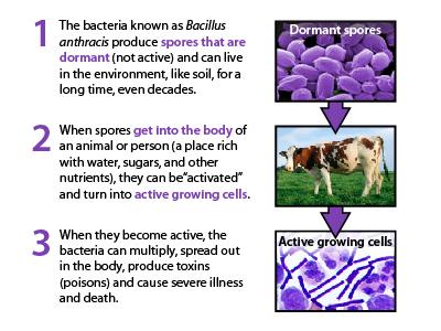 anthrax in cattle beef2live eat beef * live better Viral Gastroenteritis Diagram