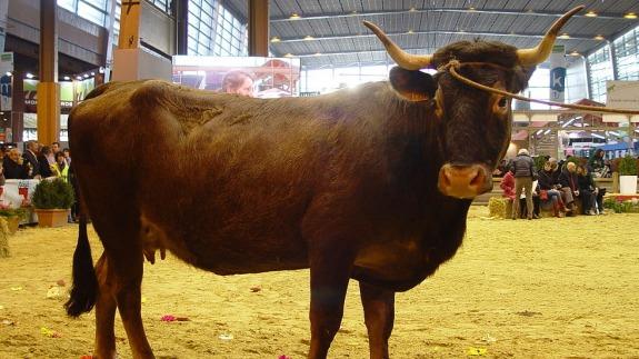Types Of Bull Horns